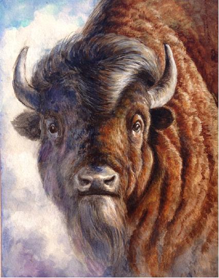 保护野生动物绘画大赛